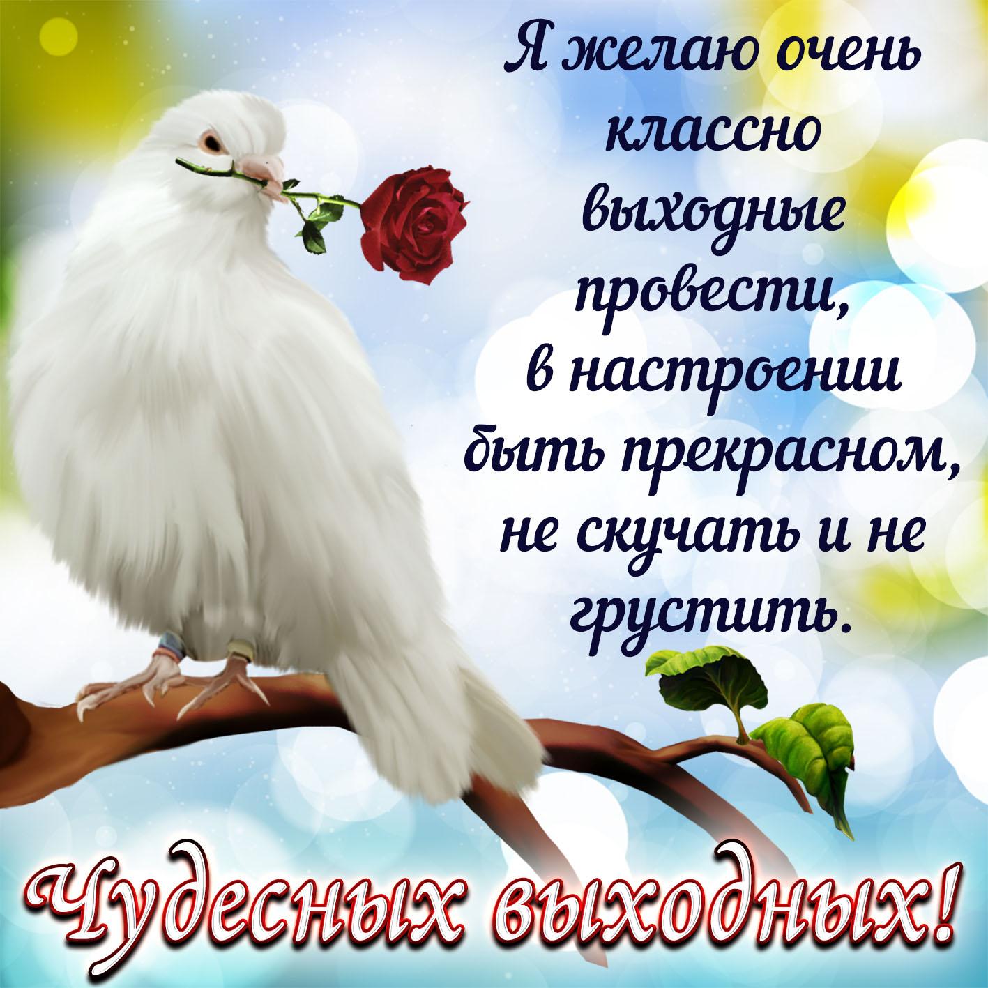Картинка чудесных выходных с голубем и красной розочкой