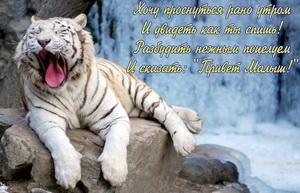 Зевающий тигр на фоне водопада