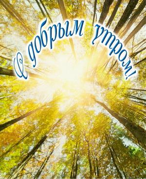 Свет солнца в кронах деревьев