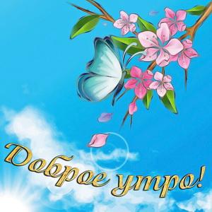 Бабочка на красивой цветущей ветке
