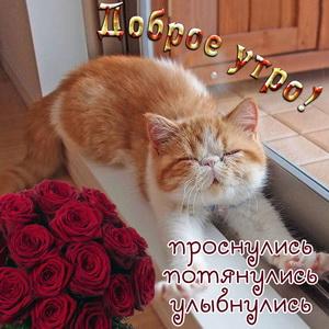 Картинка с милейшим котиком и красными розами