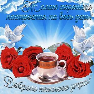 Розы и голуби в красивом оформлении