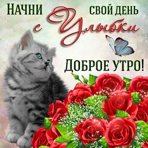 Открытка на доброе утро с котиком и букетом роз