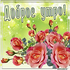 Открытка доброе утро с красивыми розами в рамочке