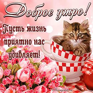 Милый котик желает тебе доброго утра на яркой открытке