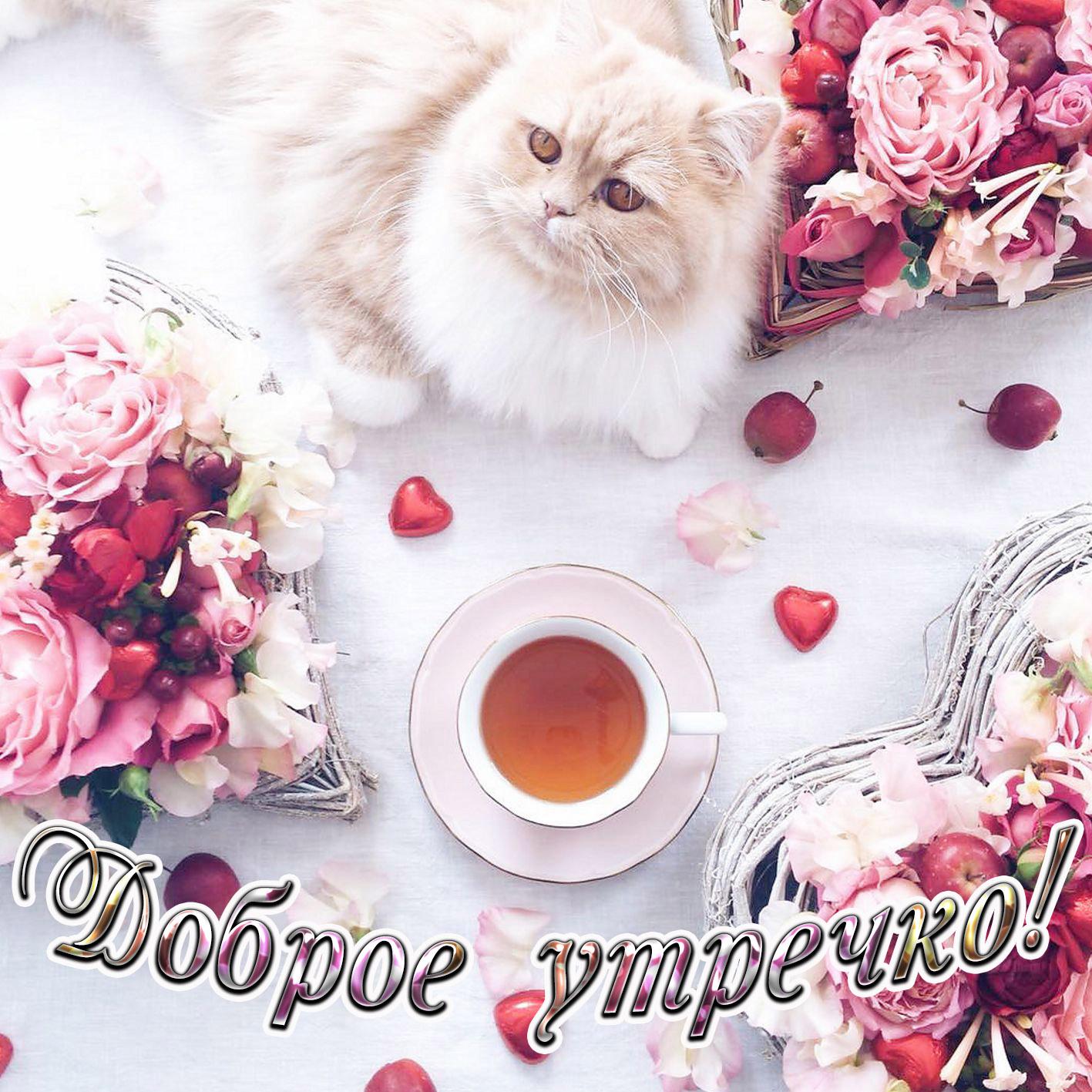 Открытка доброго утра с пушистым котиком и цветами