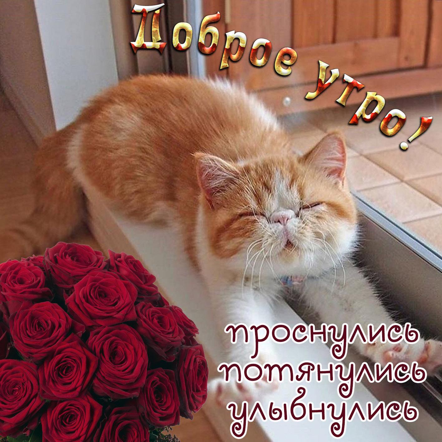 Картинка доброе утро с милейшим котиком и красными розами