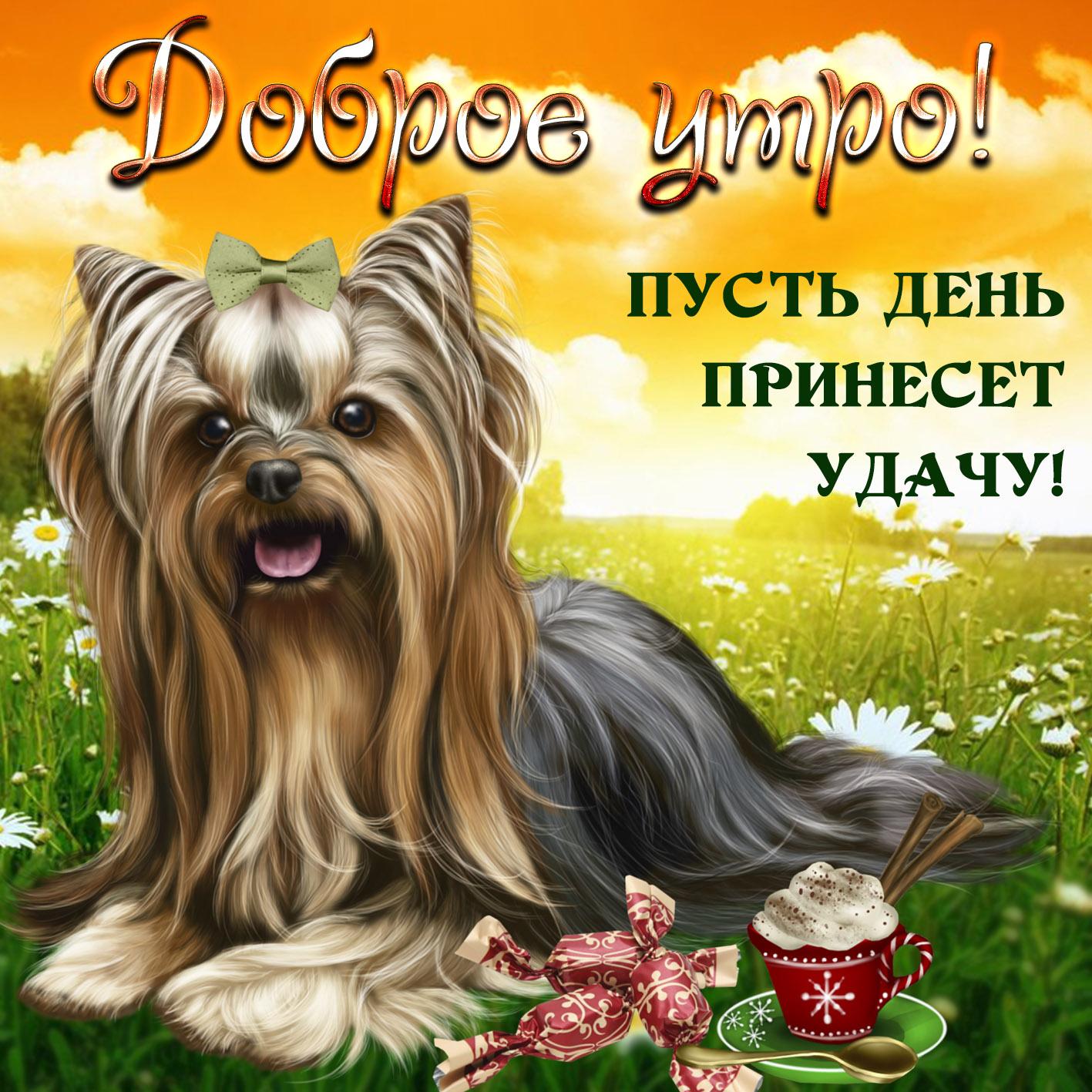 Картинка доброе утро с милой собачкой на травке
