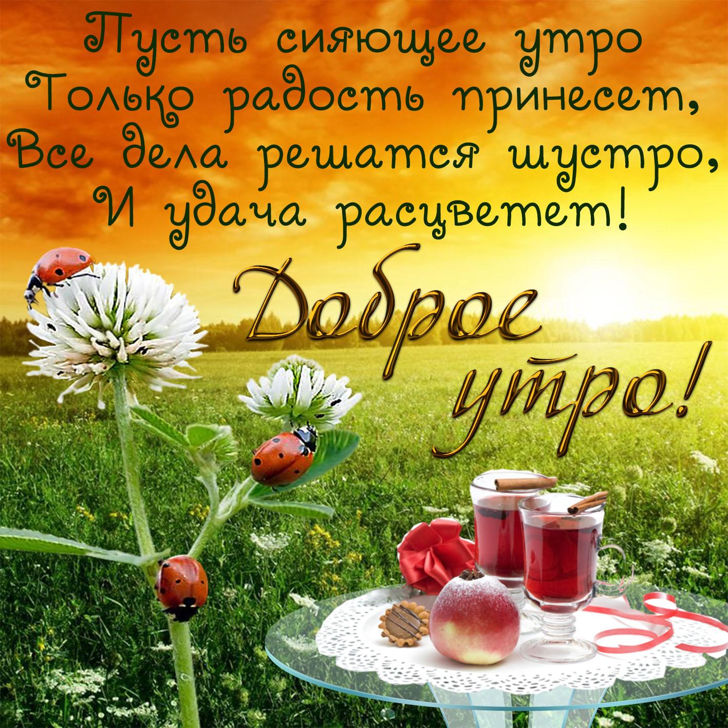 Картинки с цветами с добрым утром хорошего дня пожелания