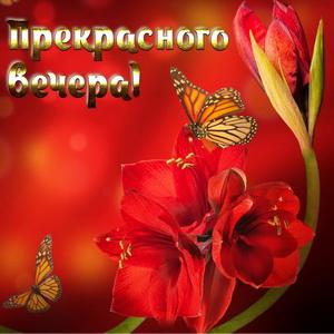 Бабочки на фоне красных цветов