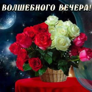 Волшебного вечера и букет роз