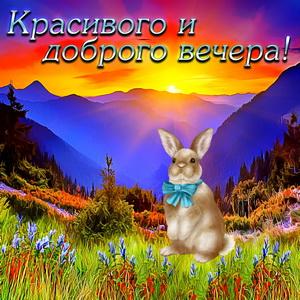 Милый кролик на фоне красивого заката