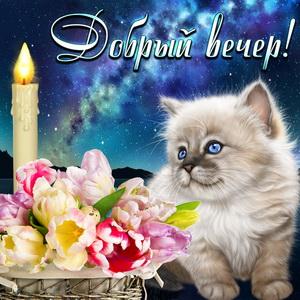 Котёнок и цветы под звёздным небом