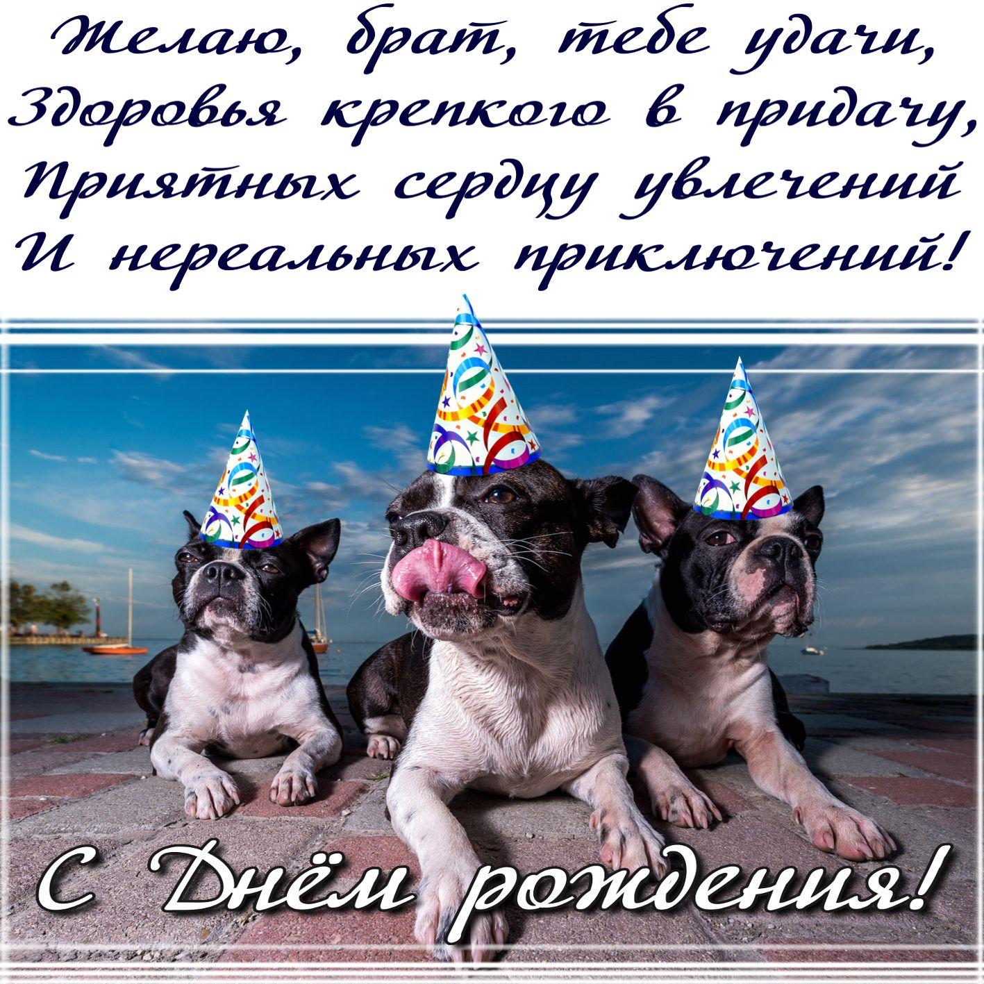 Открытка на День рождения брату - забавные собачки в колпачках