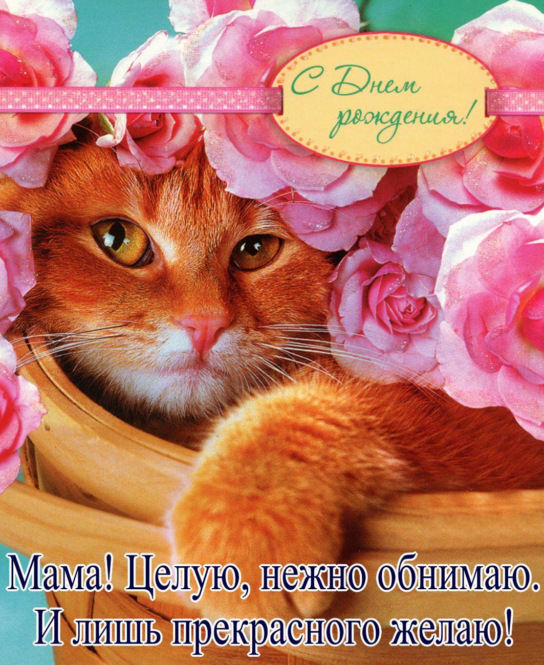 Открытка с Днём рождения маме - рыжий котик в корзине с розами