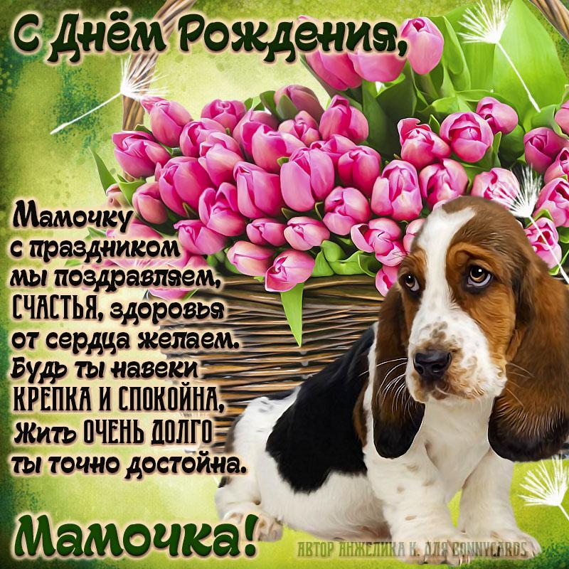 Картинка для мамочки с собачкой и тюльпанами на День рождения