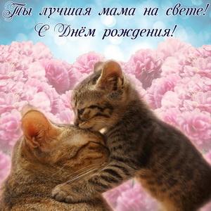 Котики на фоне красивых розовых цветов