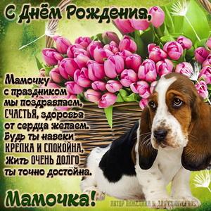 Картинка для мамочки с собачкой и тюльпанами