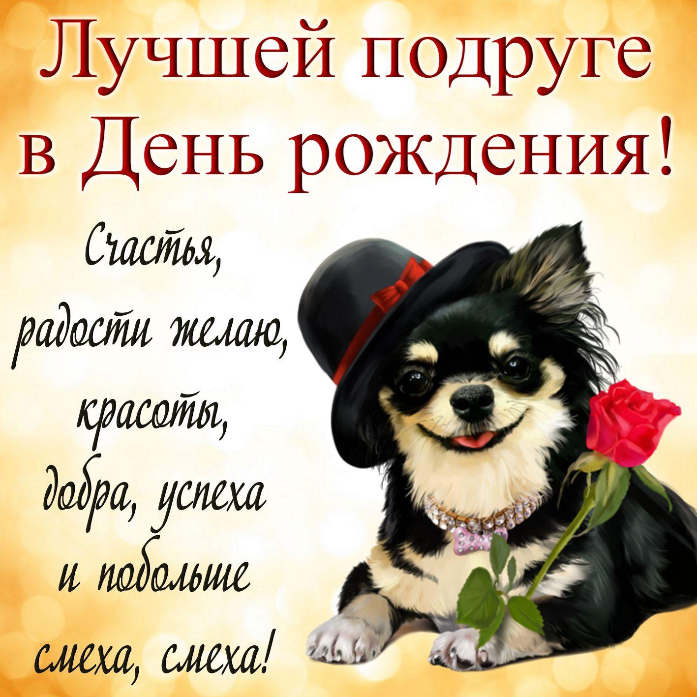 Открытки с Днём рождения подруге - красивая собачка в шляпке с розой