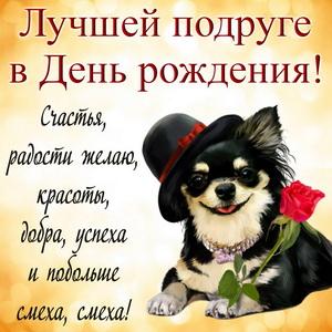 Красивая собачка в шляпке с розой