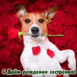 Забавный песик с розой для сестры