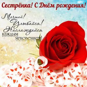 Красная роза в красивом оформлении