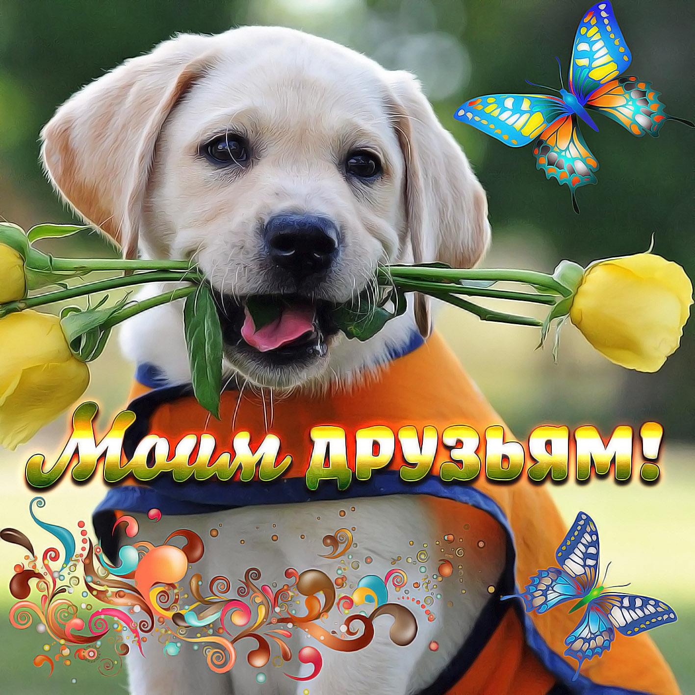 Днем рождения, открытка с собакой для друга