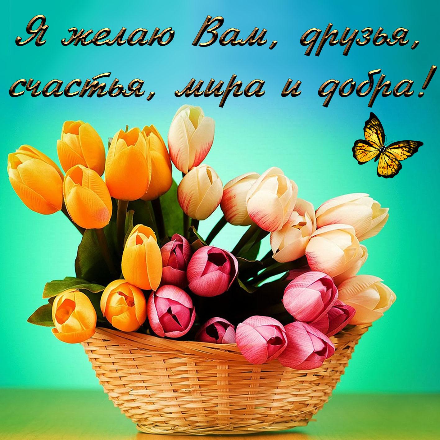 Открытка с корзиной тюльпанов для друзей