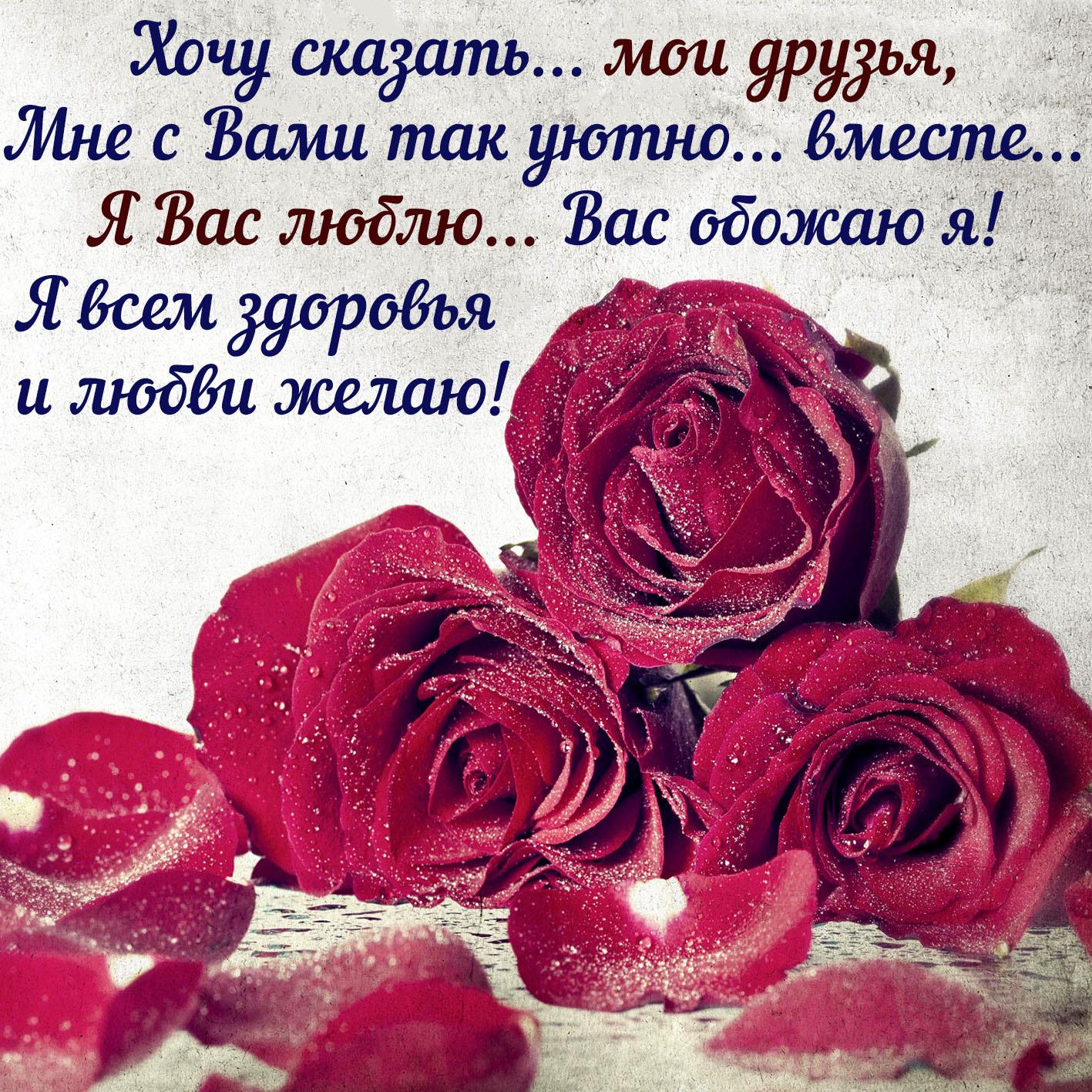 Картинка для друзей с бордовыми розами