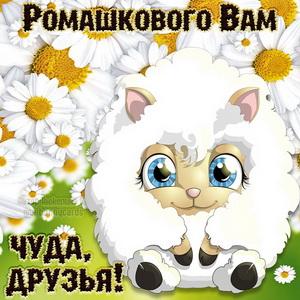 Милая овечка желает друзьям ромашкового чуда