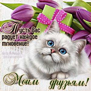Открытка с милым котиком для моих друзей