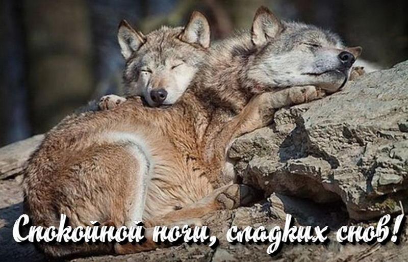 открытка - красивые волчки видят сладкие сны