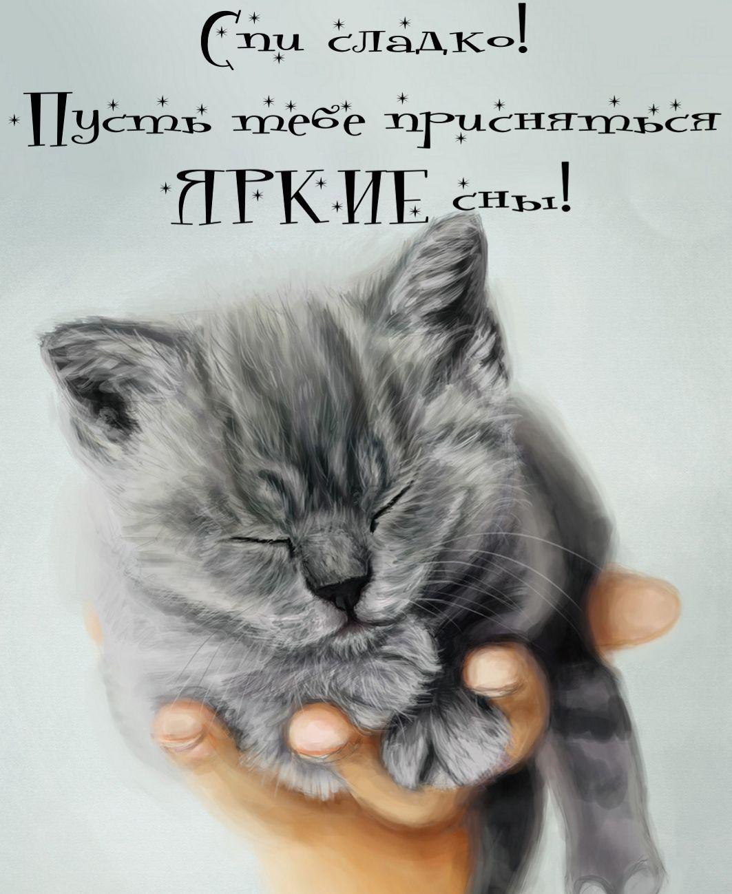 открытка - маленький котенок спит на руке