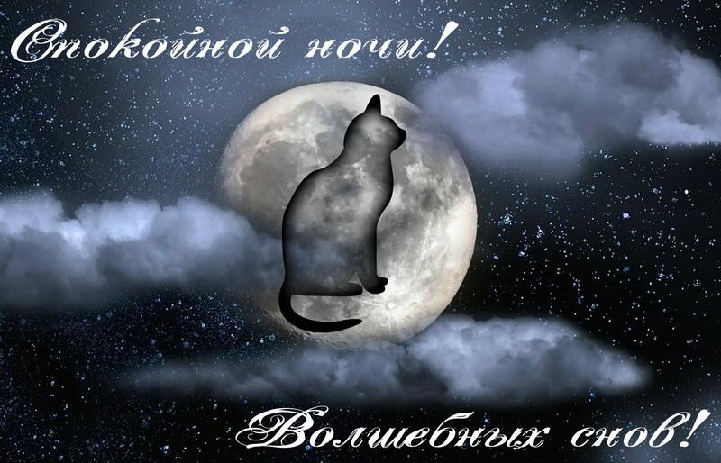 открытка - силуэт кошки на фоне ночной луны
