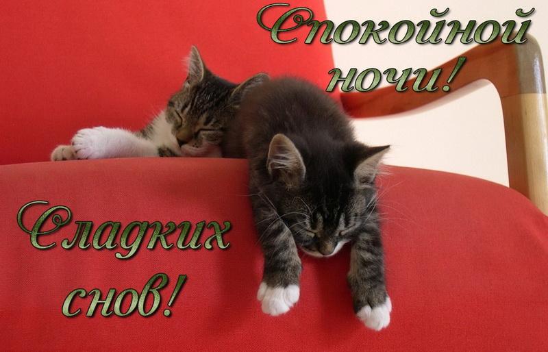 открытка - маленькие котята спят на красном кресле