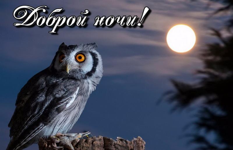 открытка - филин на фоне ночной луны