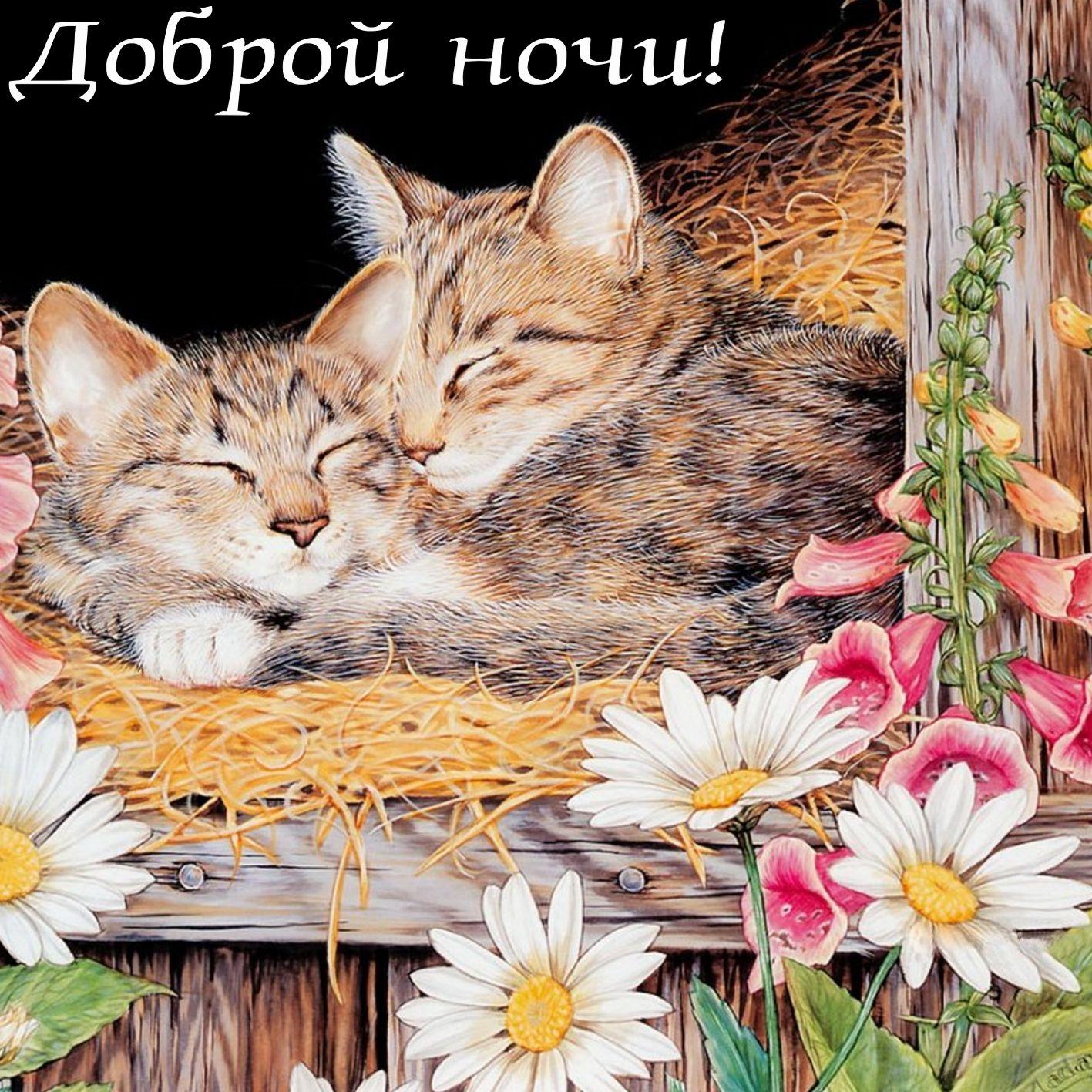 Открытка доброй ночи со спящими котятами