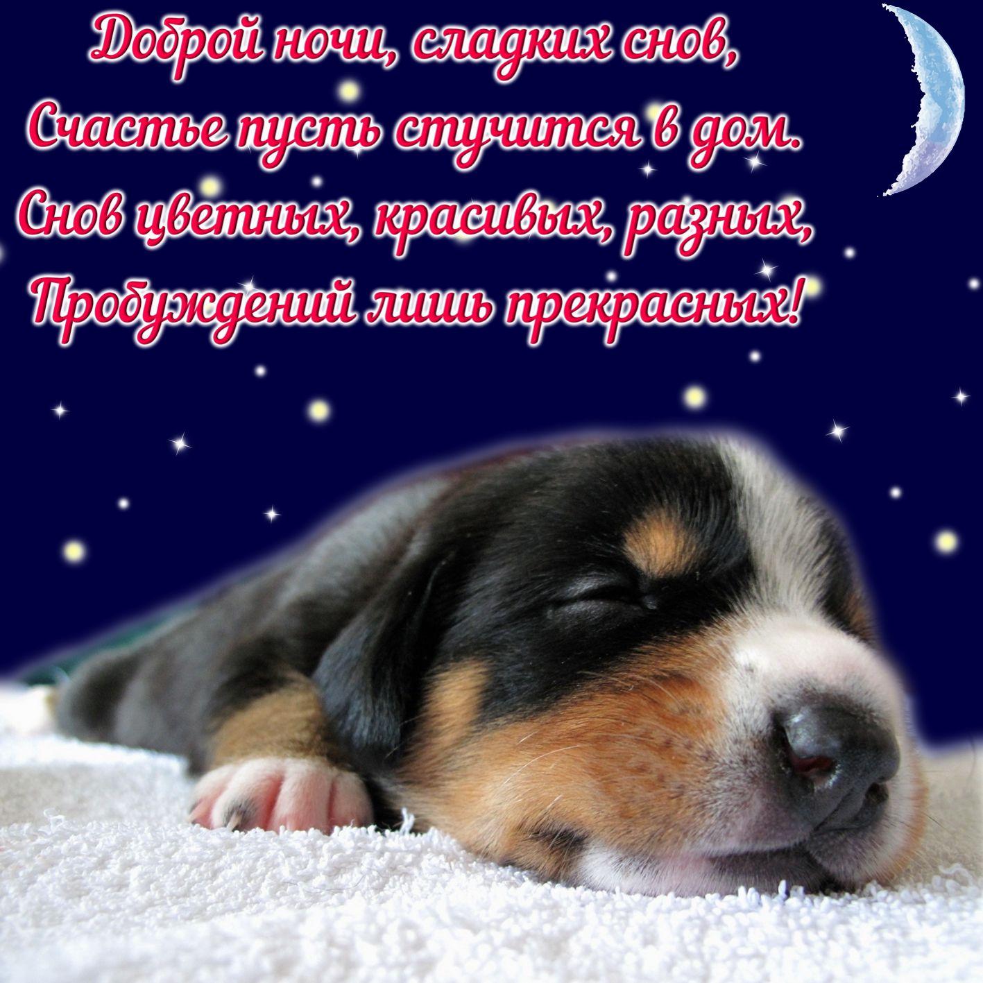 Симпатичный пёсик и пожелание сладких снов