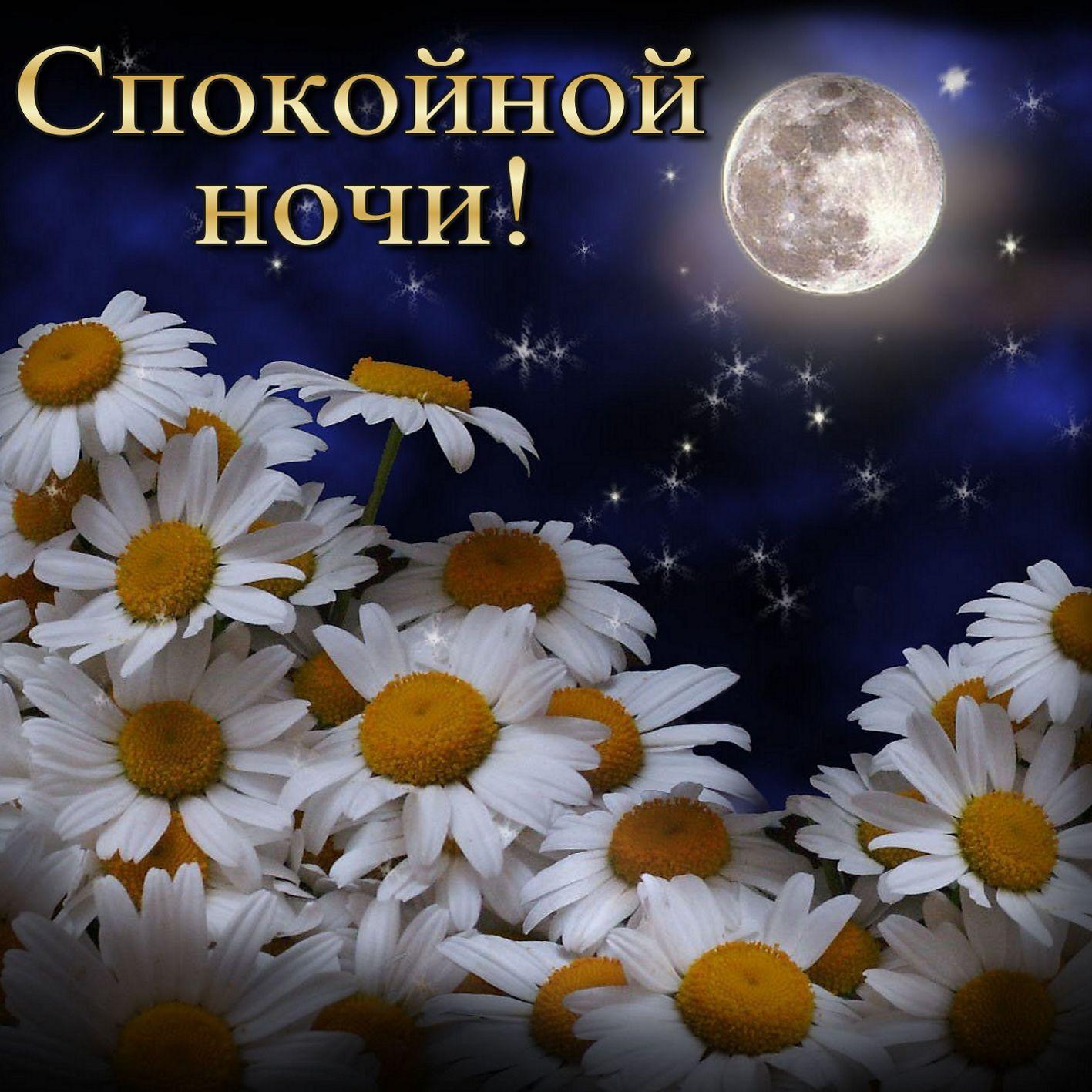 Открытка спокойной ночи - ромашки под полной луной в звёздном небе