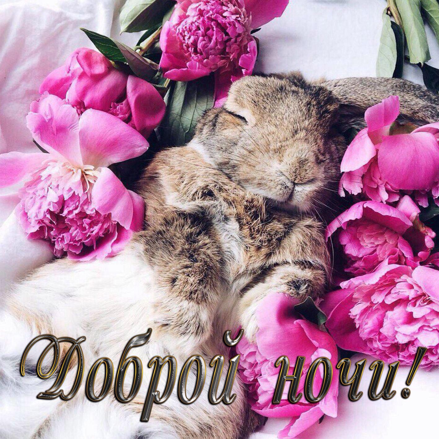 Пожелание доброй ночи с кроликом