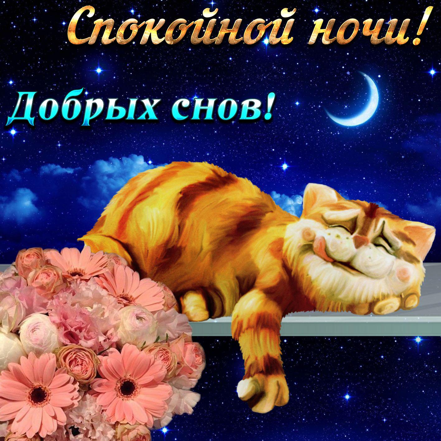 Открытка - прикольный кот желает добрых снов