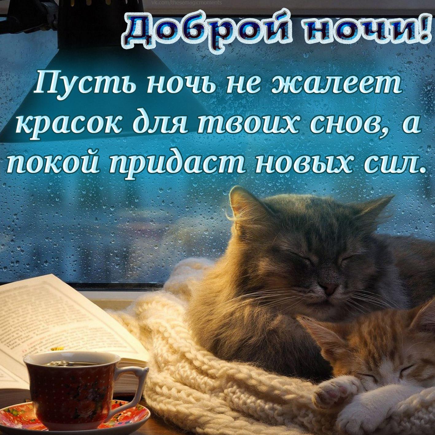 Открытка спокойной ночи - котики спящие у окна в каплях дождя