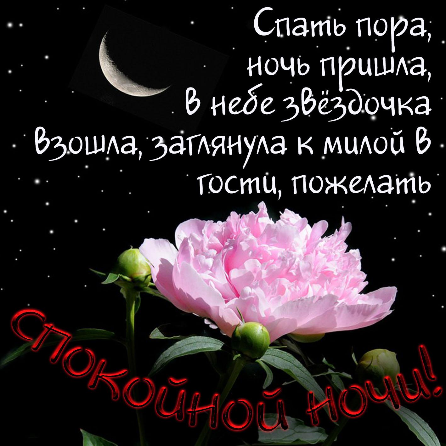 Открытка, картинки цветы девушке с надписями спокойной ночи