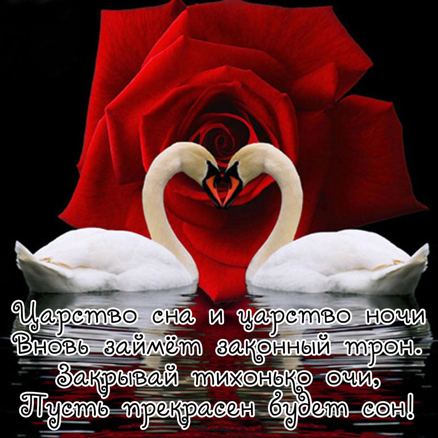 Картинка спокойной ночи с лебедями и красной розой