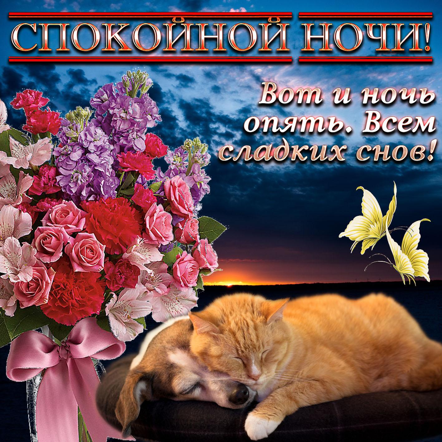 Открытка - котик и собачка желают спокойной ночи