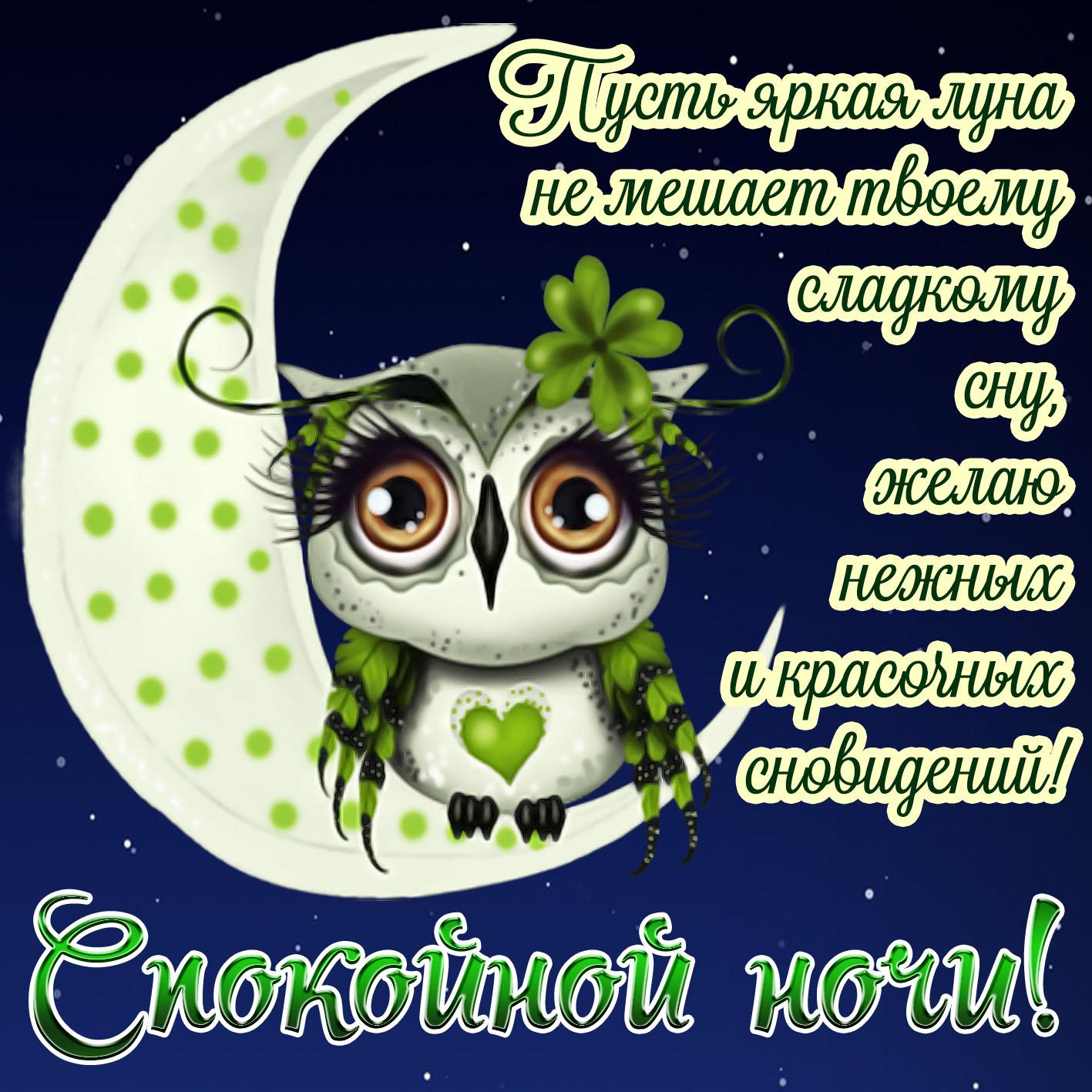 Веселые открытки с добрым вечером и спокойной ночи, фото