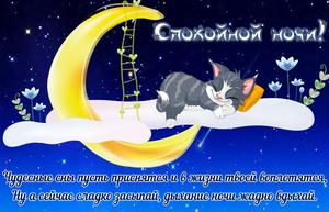 Забавный котенок спящий на луне
