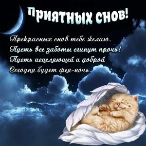 Спящий котёнок на фоне ночного неба
