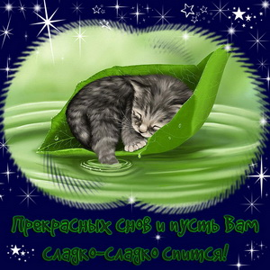 Милый котик спящий на листике