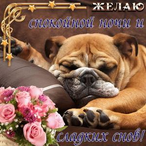 Забавный пёсик и пожелание сладких снов